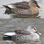 Westfalenpark-Vogel unten. C) beim Melder